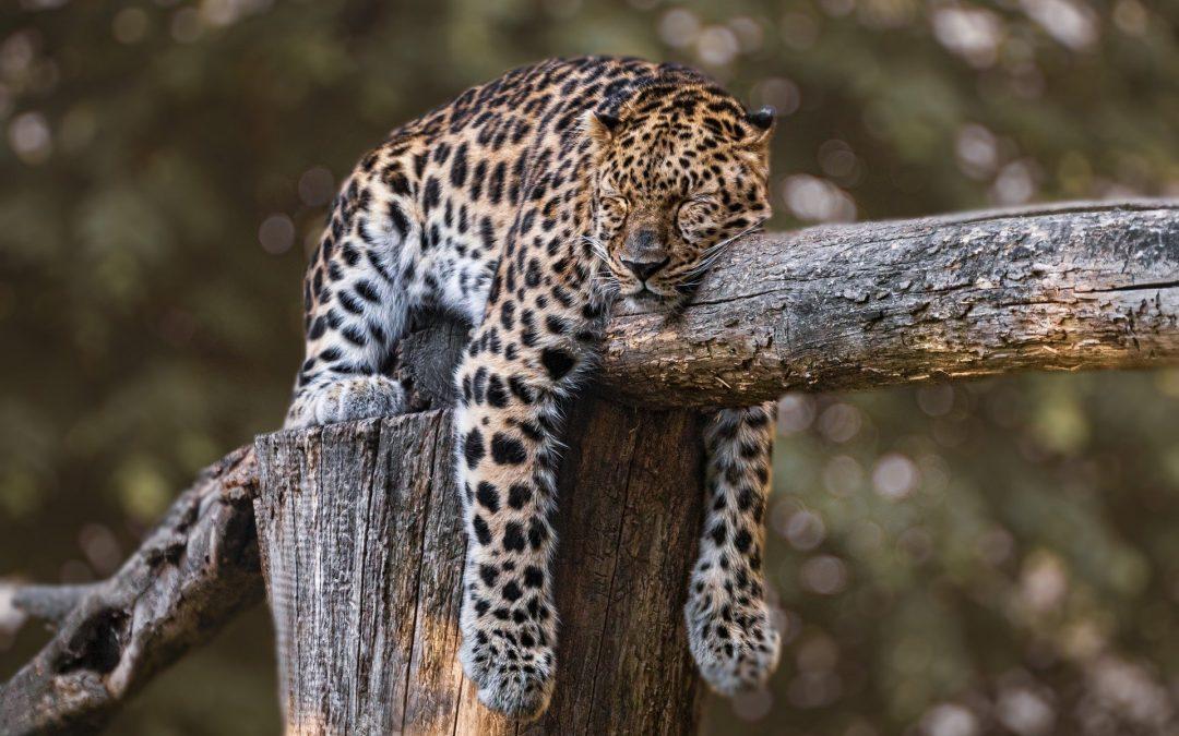 Bien dormir : ce qu'il faut absolument savoir